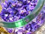 violette-vin-blanc