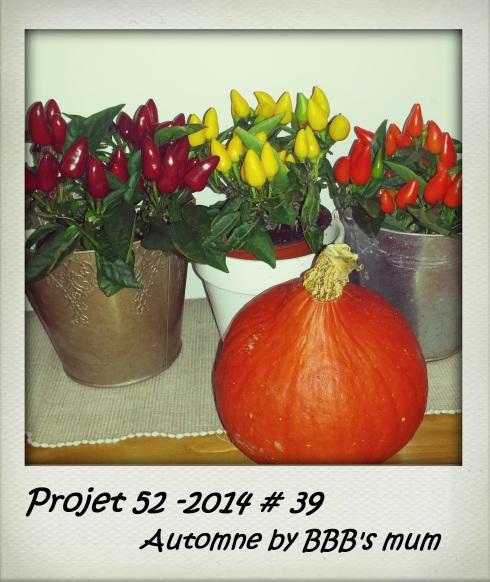 projet52-39